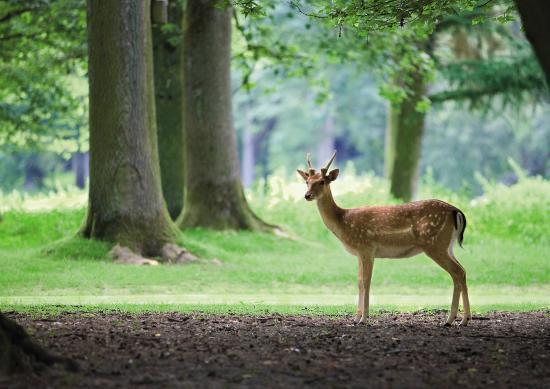 Center Parcs Le domaine du bois aux daims Tourisme aux alentours du camping du Futur  # Adresse Bois Aux Daims
